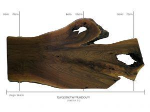 Baumscheibe europäischer Nussbaum