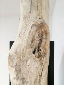 Baumstamm Treibholz Detail